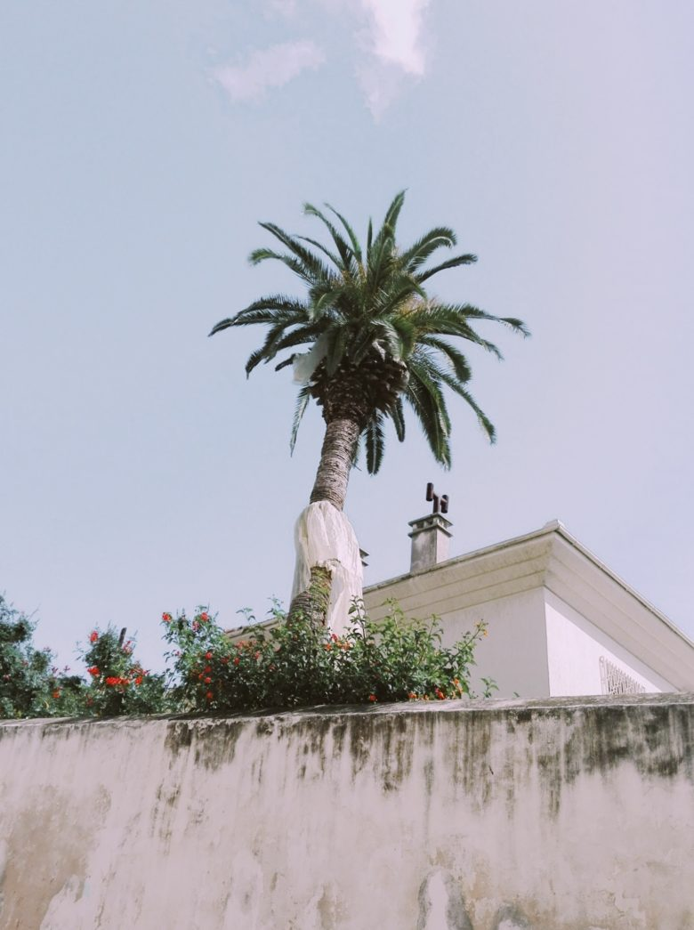 palm tree by a house